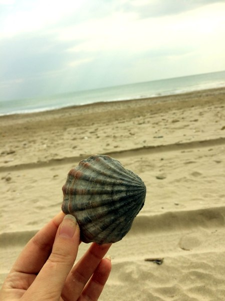 beautiful beach and seashell in Montpellier