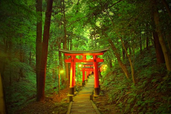 Magical Forest Kyoto Torii