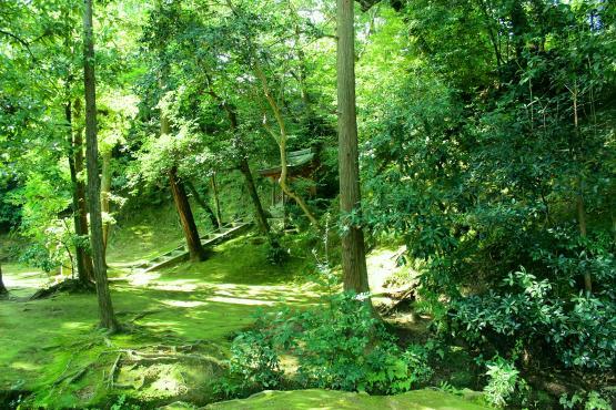 kinkakuji_forest