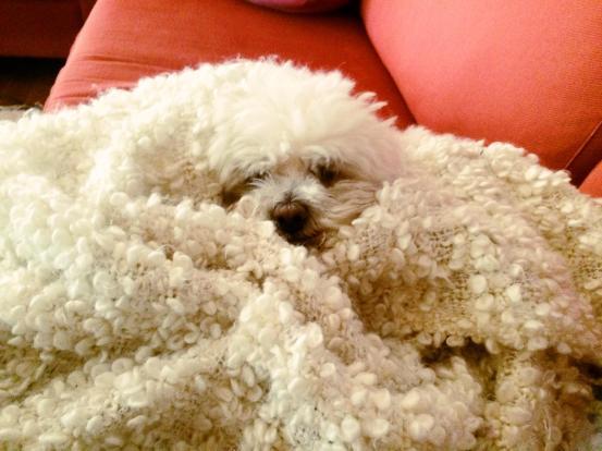 hiding_dog