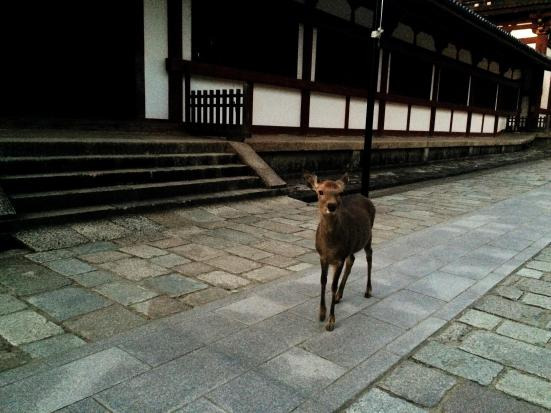 Nara cute tame deer