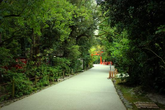 Japanese Forest Path torii