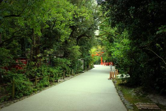 Japanese Forest Path torii