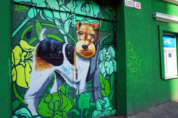 Travel Blog: Dog graffiti in Bratislava